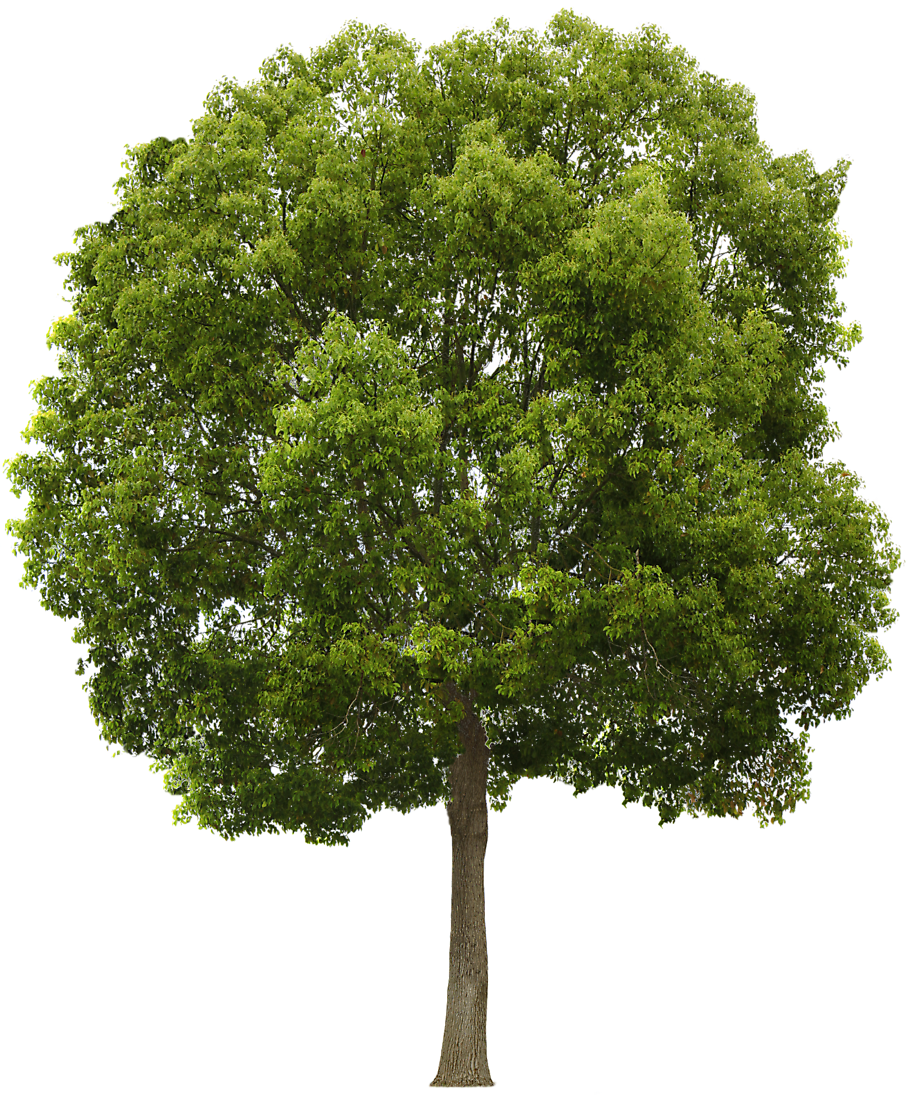 Tree png images free. Clipart forest texture