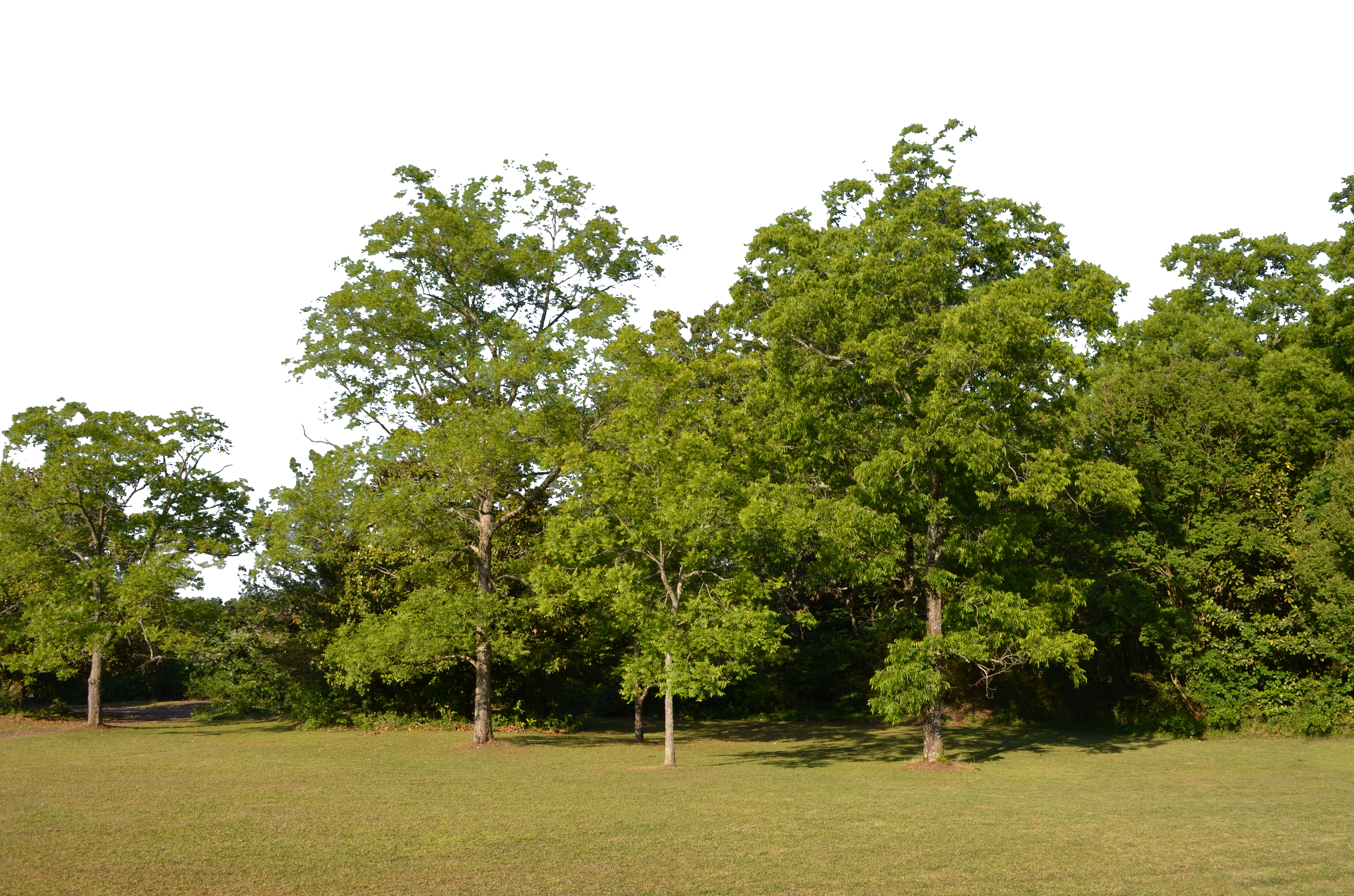 Clipart forest texture. Clearing background png stock