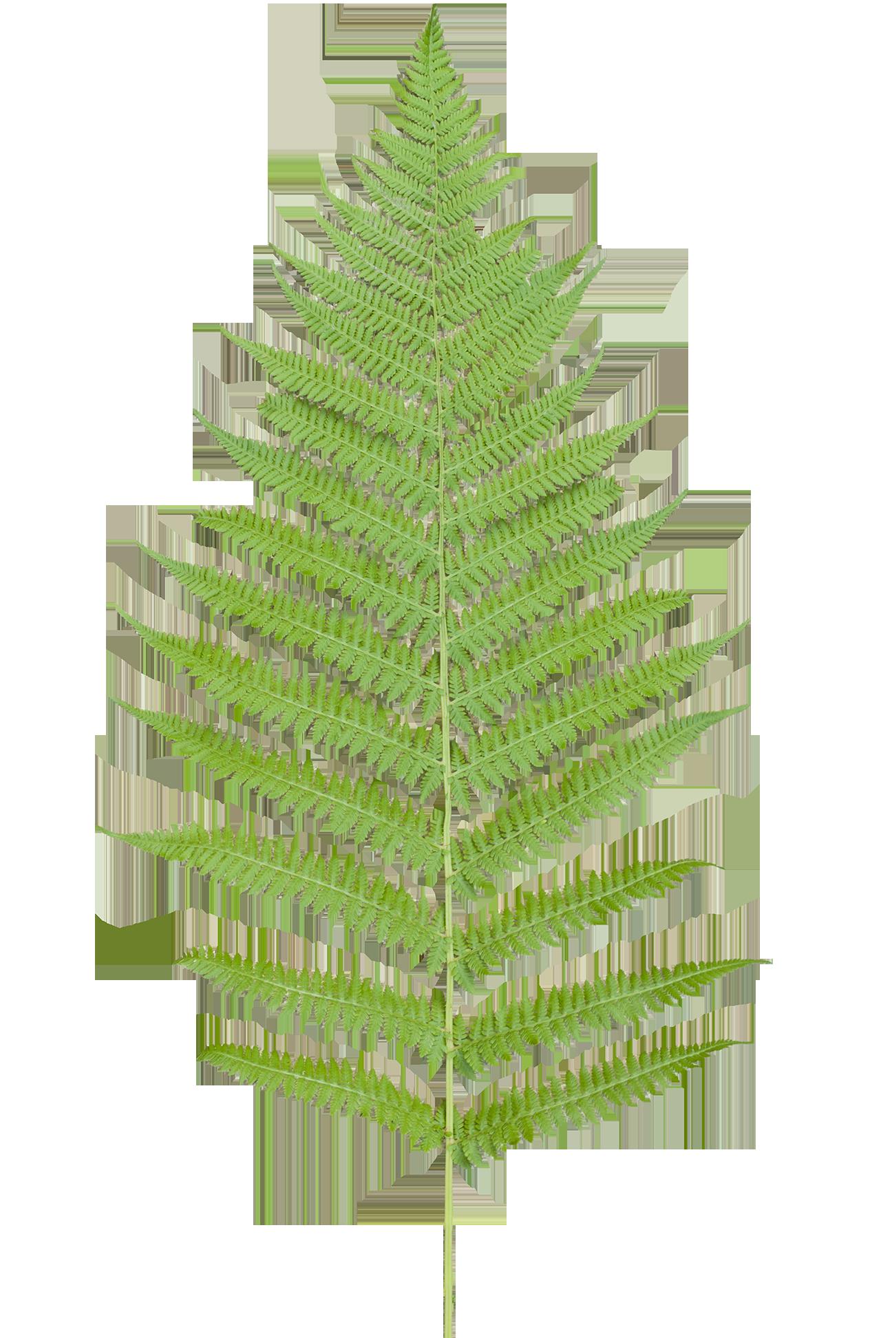 Paramecij s vegetation base. Clipart forest texture