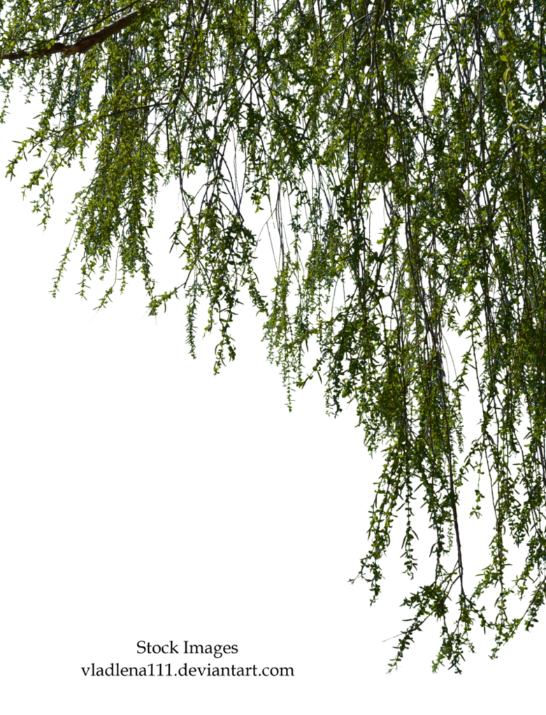 Clipart forest texture. Willow branches by vladlena
