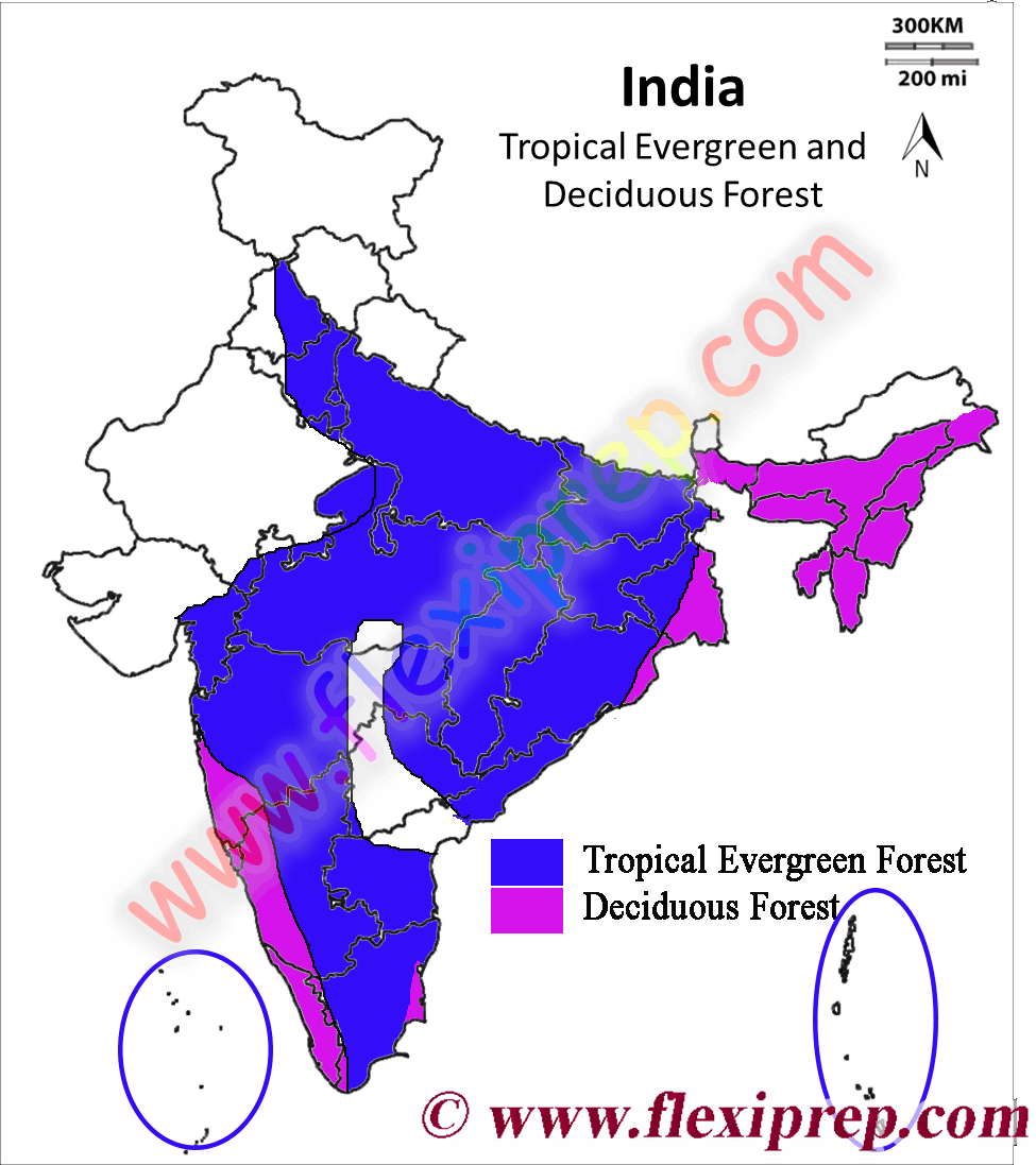 Clipart forest tropical evergreen forest. Ncert class geography solutions