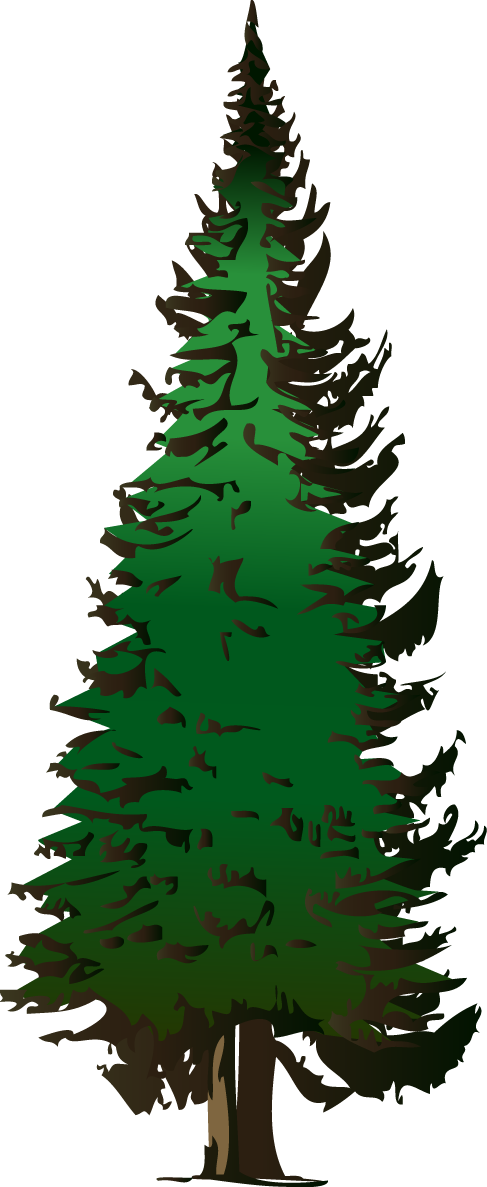 Drawing wartakita info. Clipart forest tropical evergreen forest