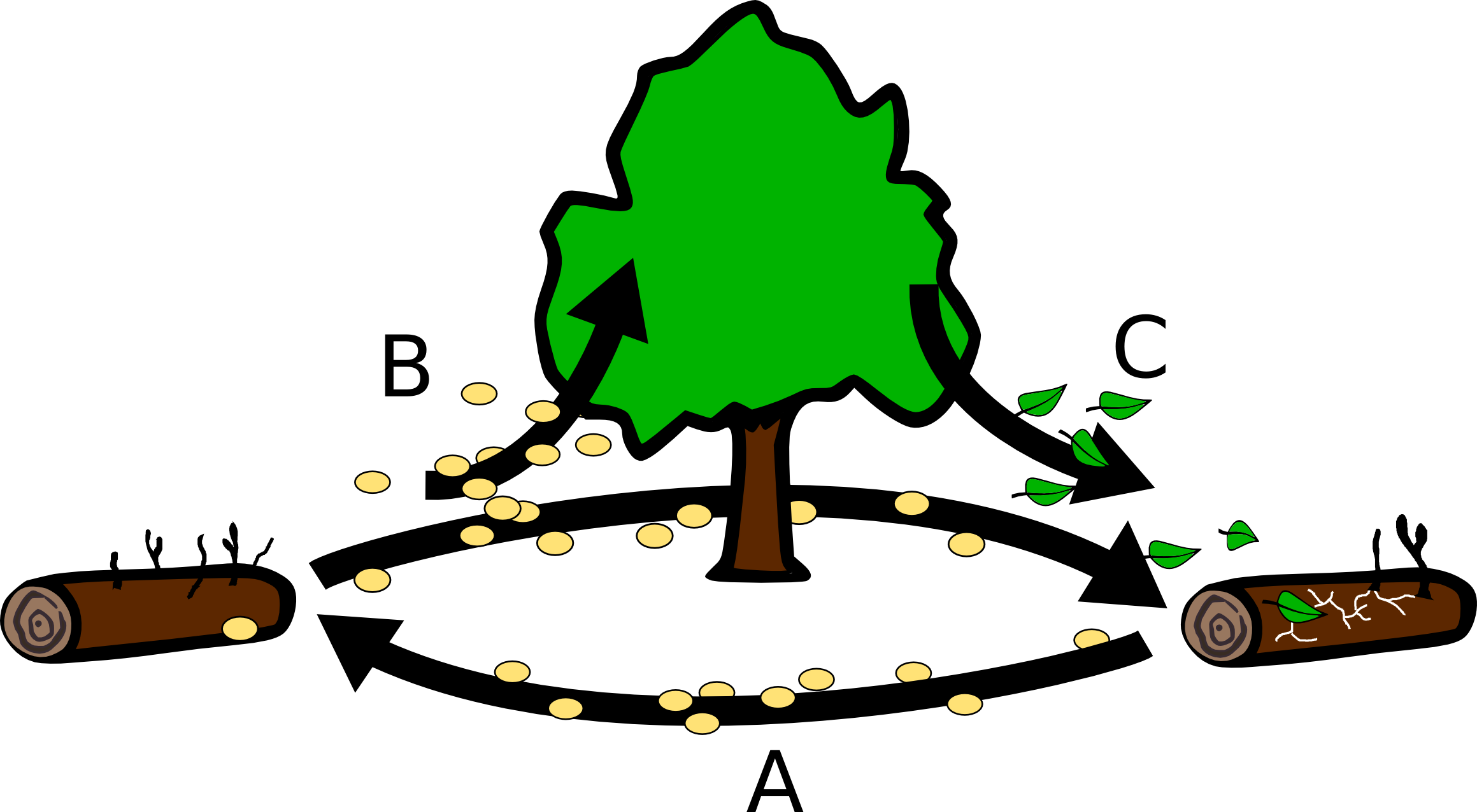 Final project dan s. Clipart forest tropical evergreen forest