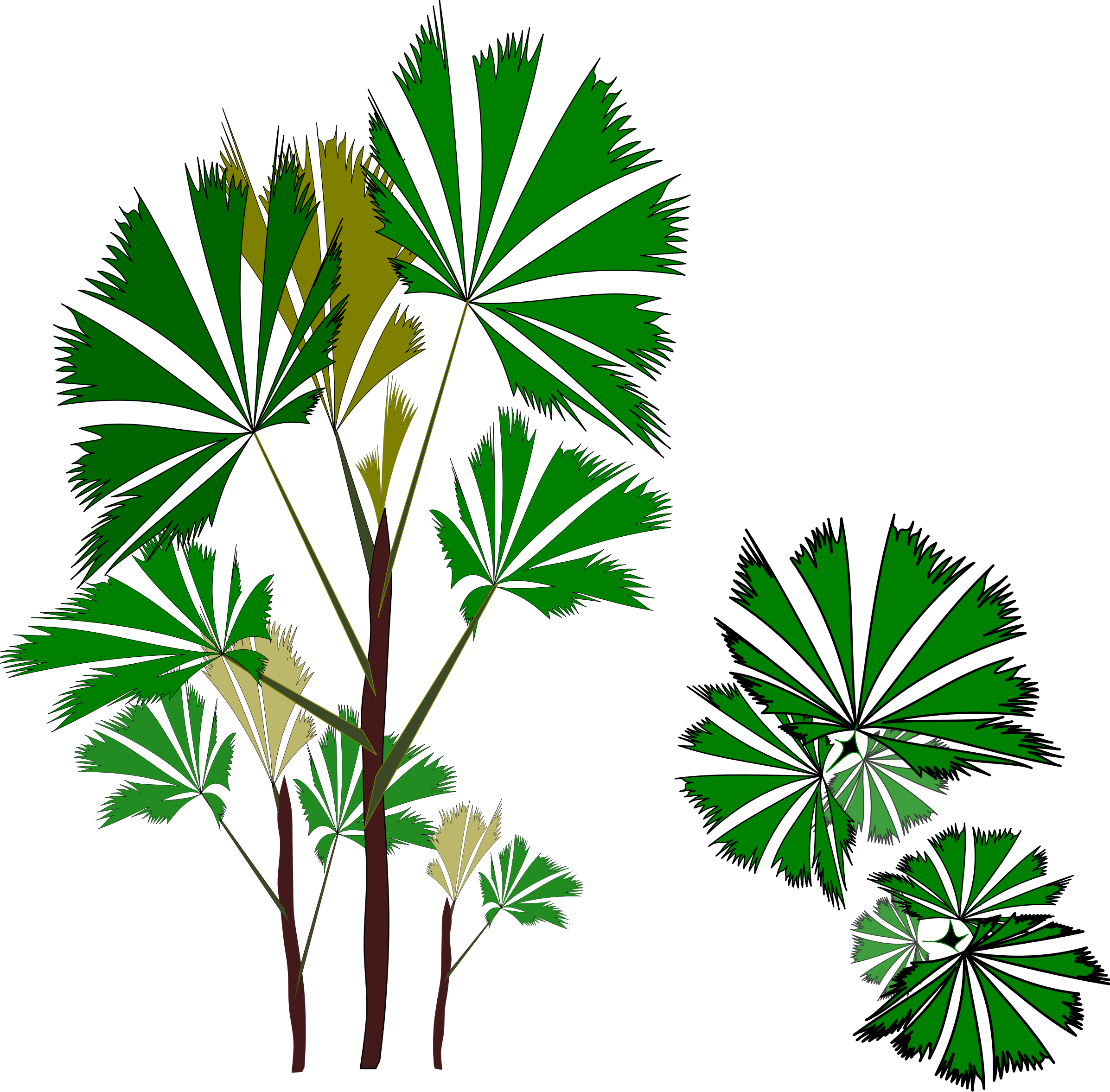 Clipart forest tropical evergreen forest. Palm raphis big image
