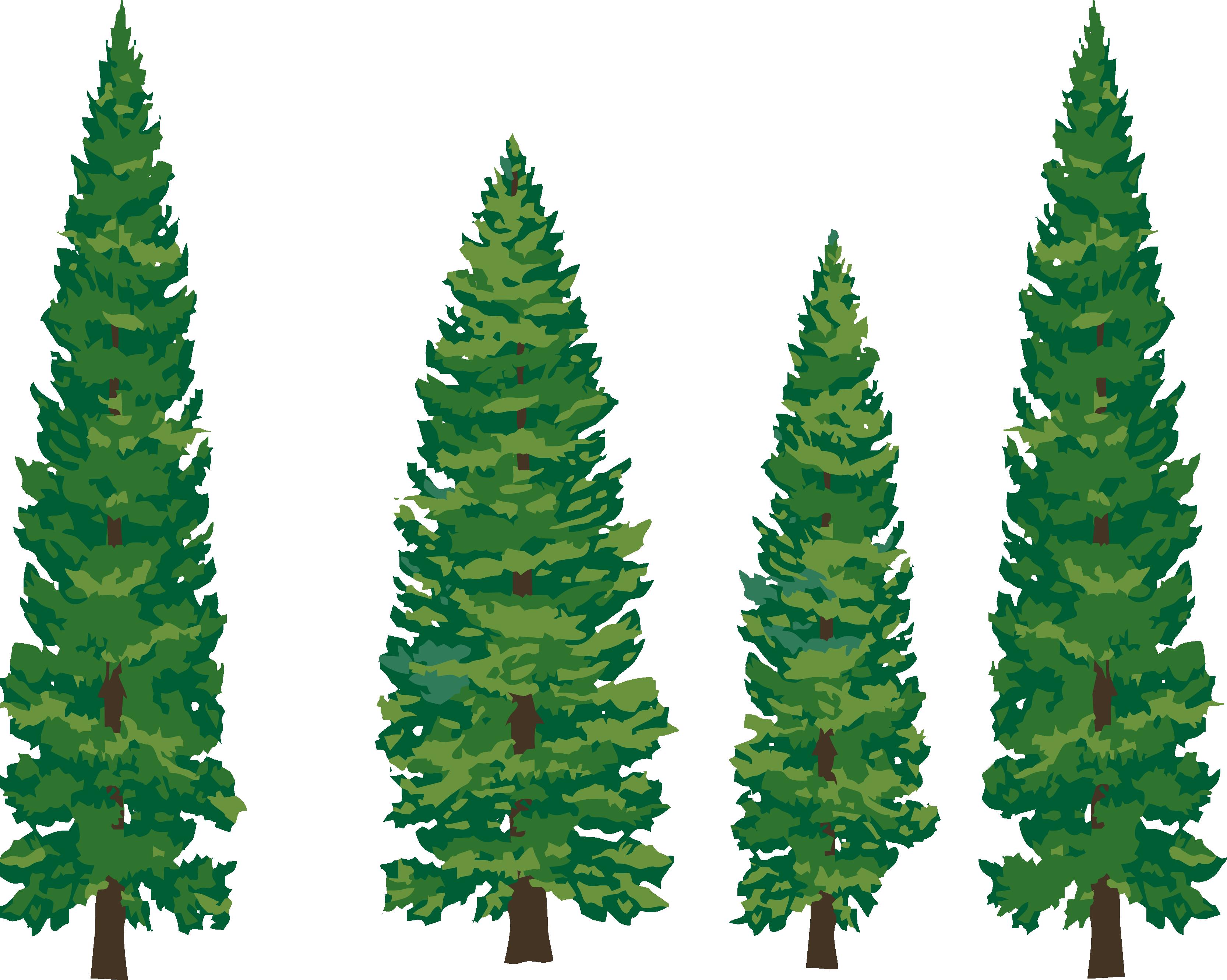 Free pine tree vector. Pinecone clipart gymnosperm