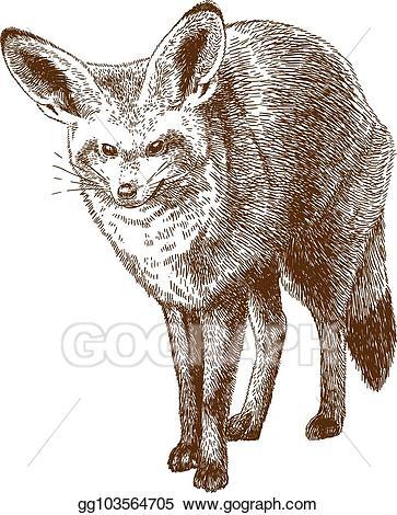Eps vector engraving drawing. Fox clipart bat eared fox