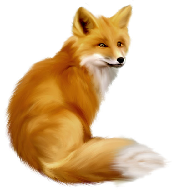 Painted gallery yopriceville high. Free clipart fox
