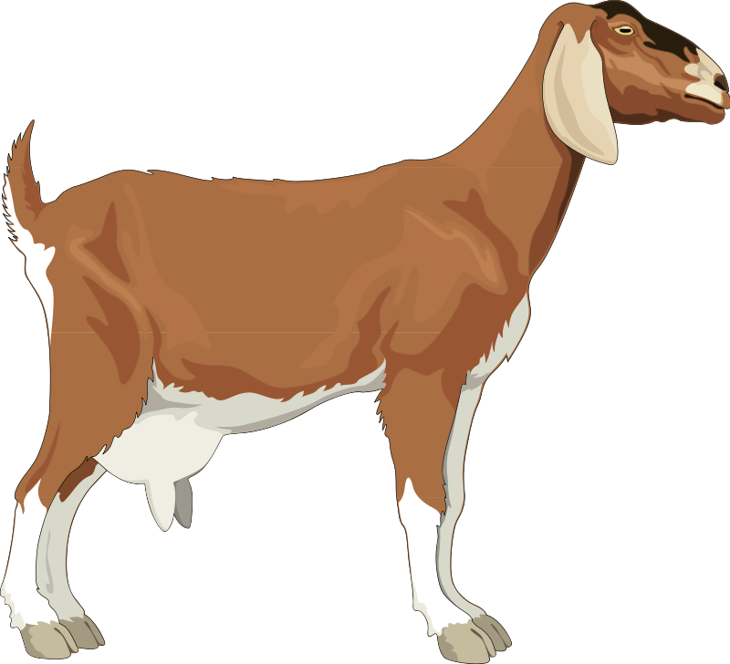 Animal pictures royalty free. Goat clipart beef cow