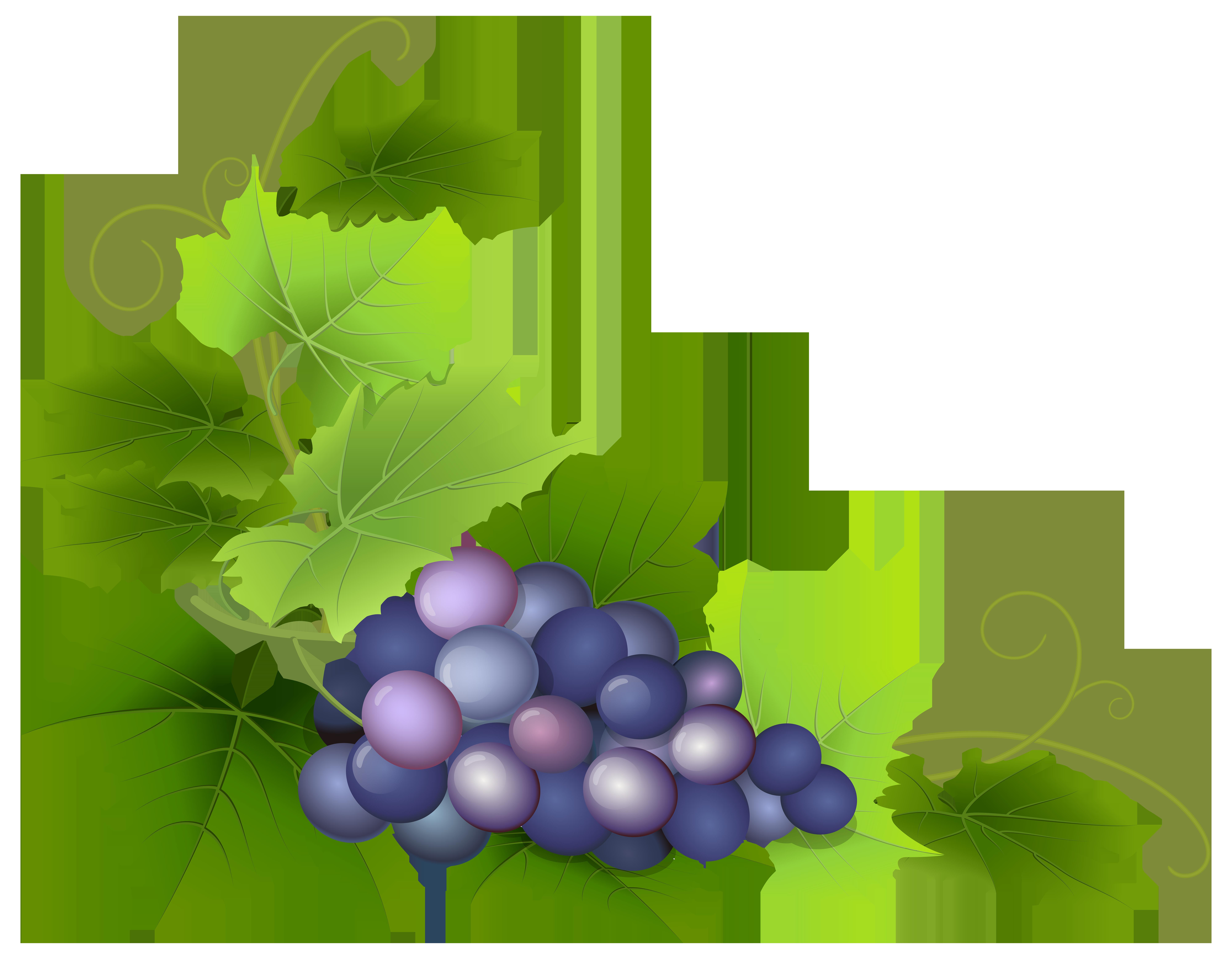grapevine clipart decoration