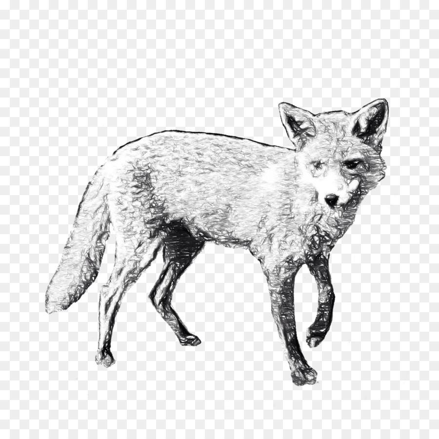 Drawing paper transparent clip. Fox clipart gray fox