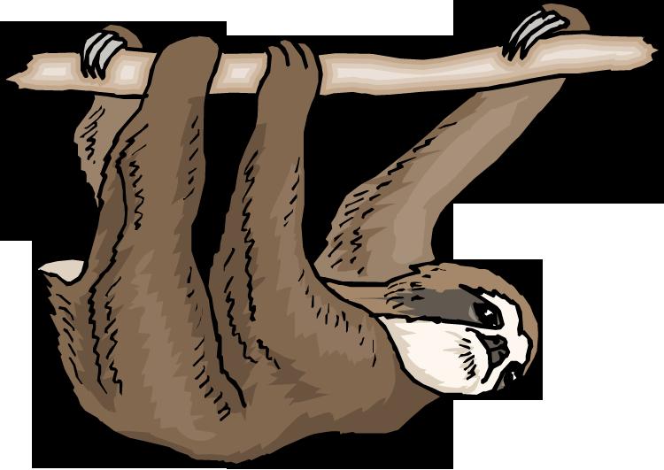 Sloths . Kiss clipart three