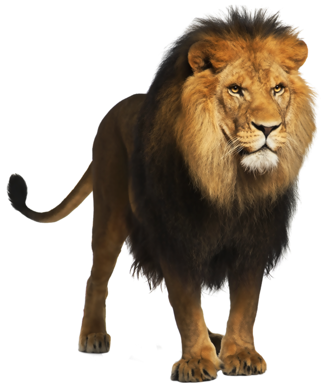 Clipart lion file. Png picture gallery yopriceville