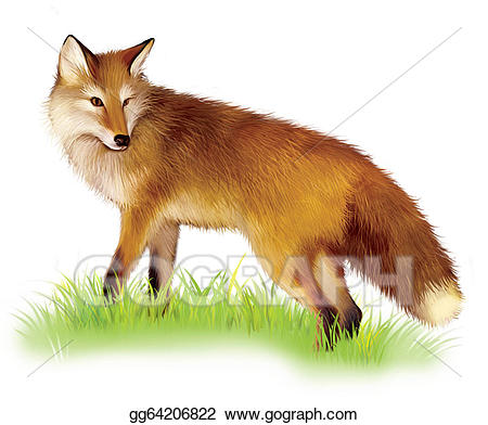Adult shaggy red standing. Fox clipart realistic