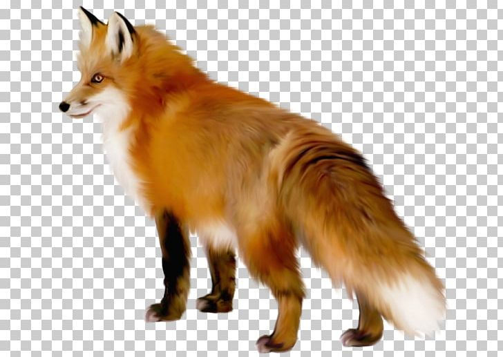 Arctic png animals art. Clipart fox red fox