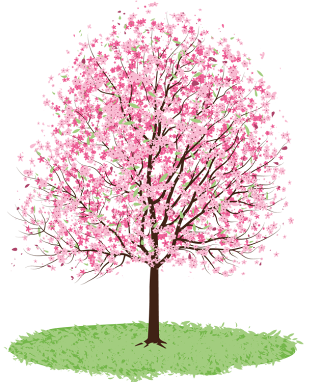 Cherry tree pencil and. Clipart png spring