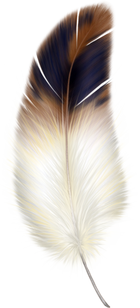Brown and white gallery. Feather clipart animal