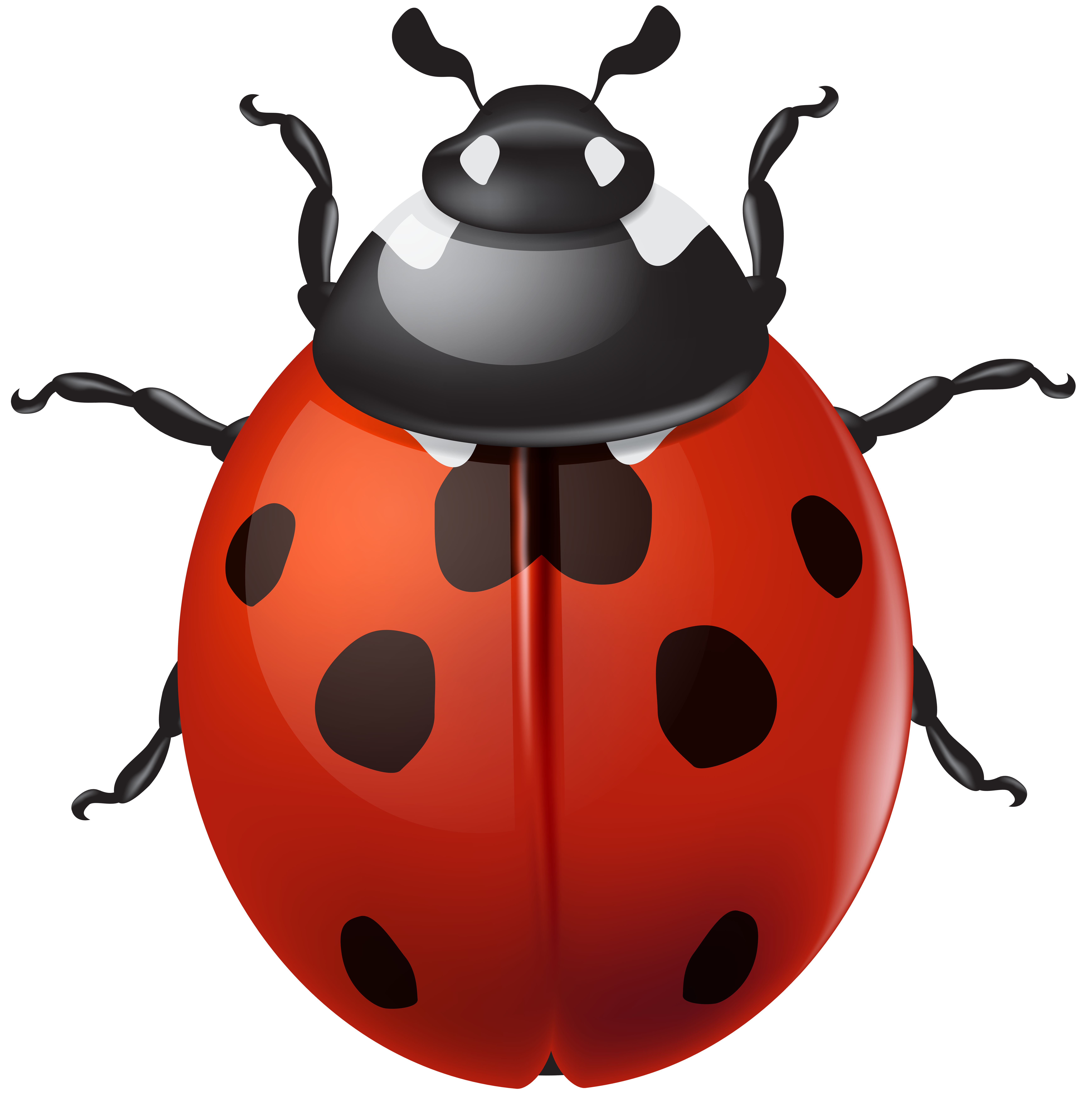 Ladybugs clipart transparent background. Ladybird png clip art