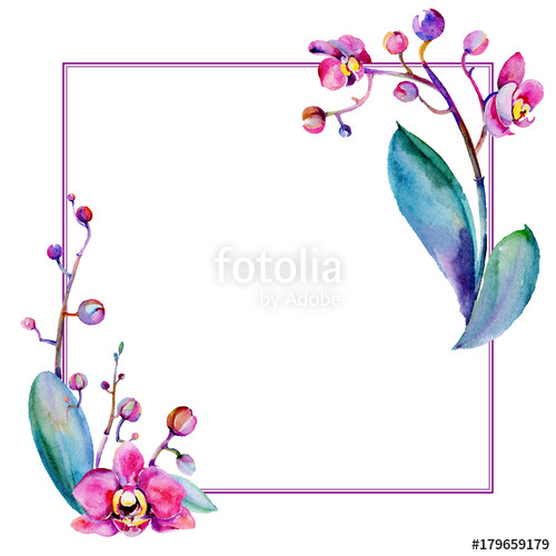Orchid clipart frame. Free download clip art