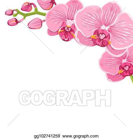Orchid clipart frame. Vector phalaenopsis flower corner