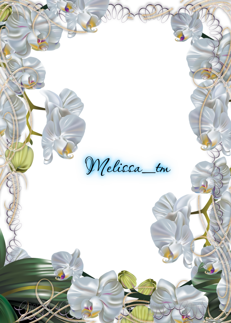 Orchid clipart frame. White orchids png by