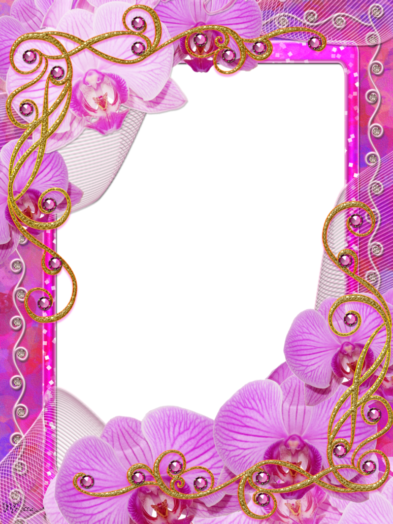 Charm of orchids png. Orchid clipart frame