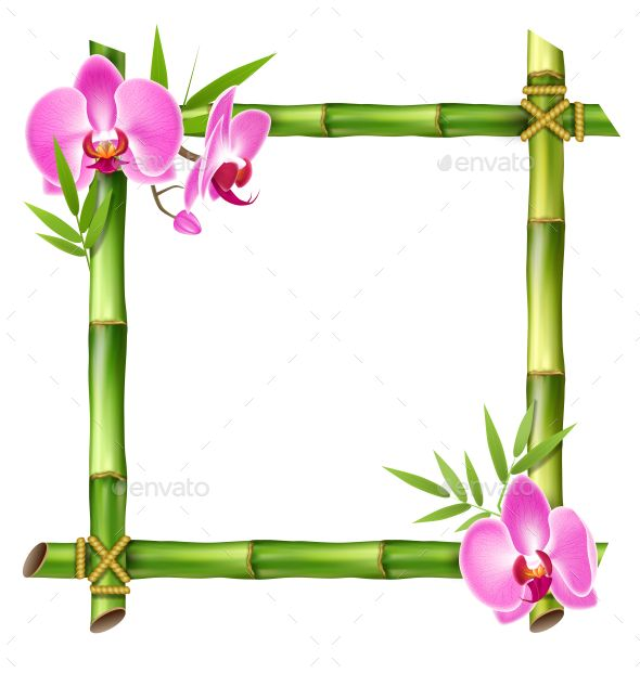 Orchid clipart frame. Green bamboo with pink