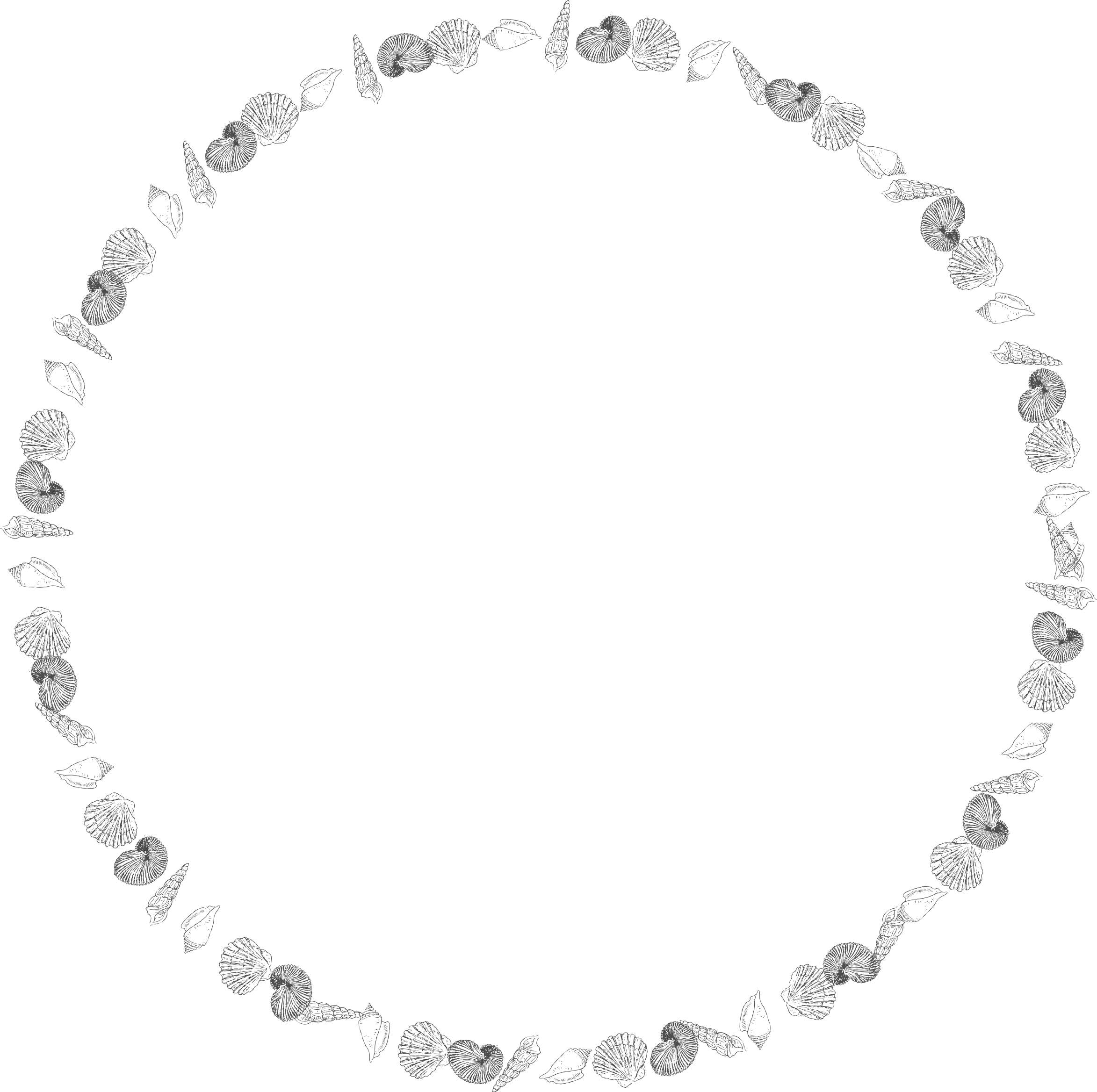 Clipart round shells big. White circle frame png
