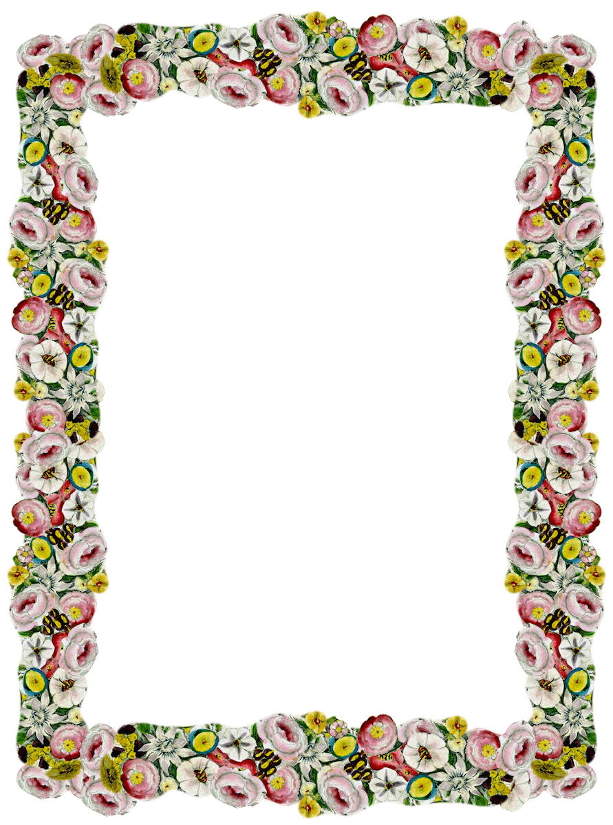 Poppy clipart border. Free digital vintage flower