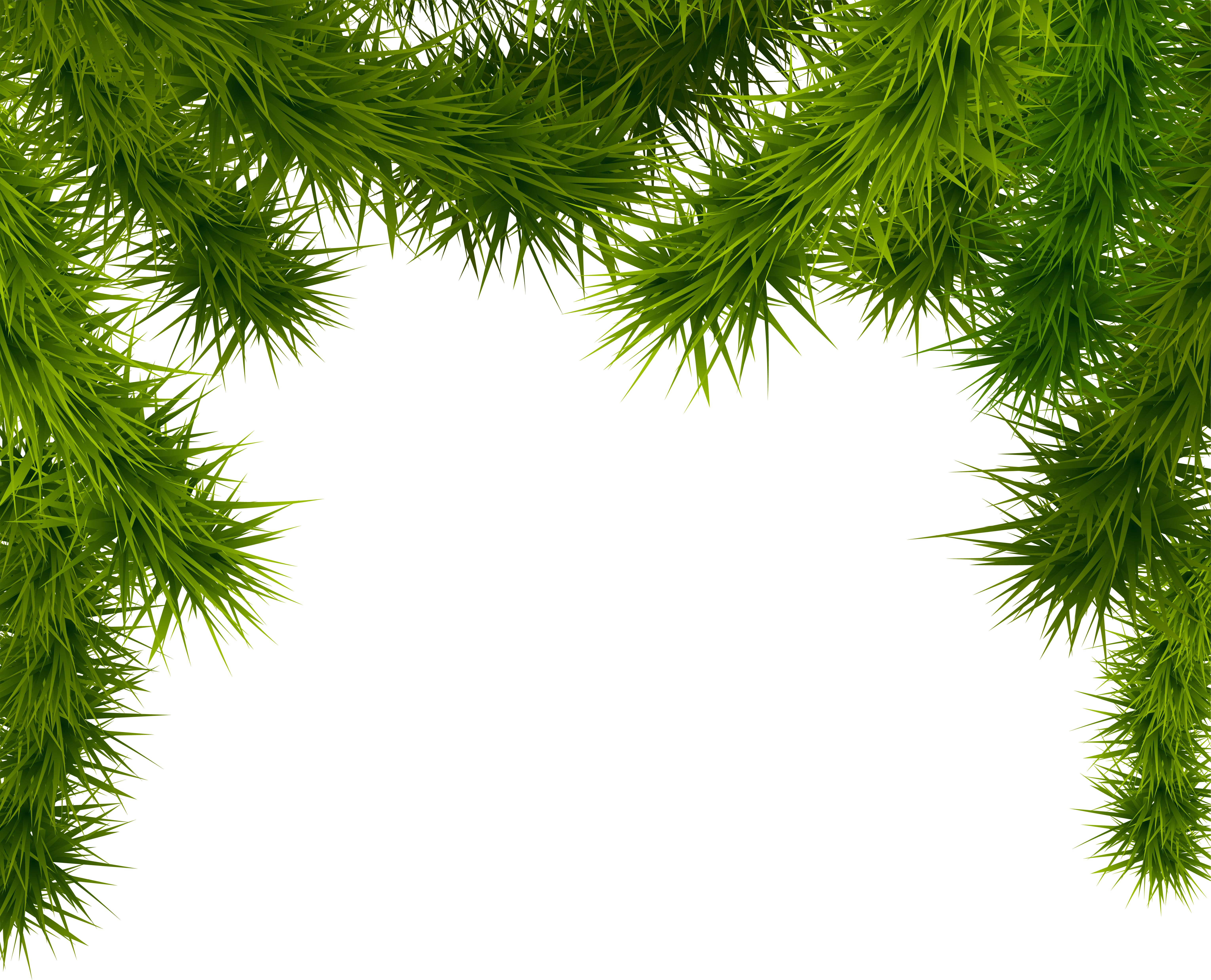 Clipart frame tree. Pine branches png image