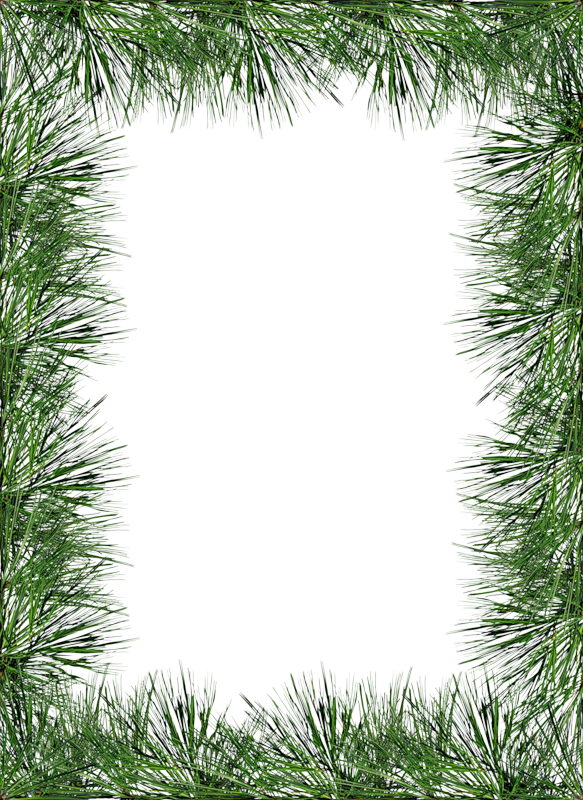 Clipart frame tree. Transparent png pine photo