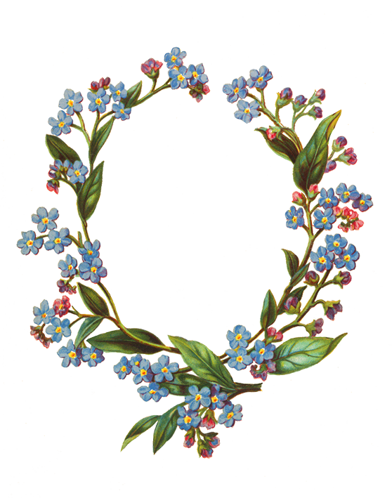 Borders and forgetmenot frame. Frames clipart flower
