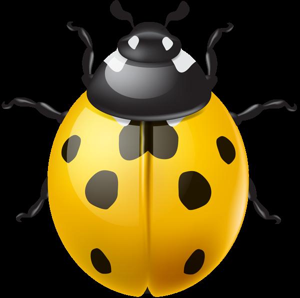 Ladybug clipart green ladybug. Yellow ladybird png clip