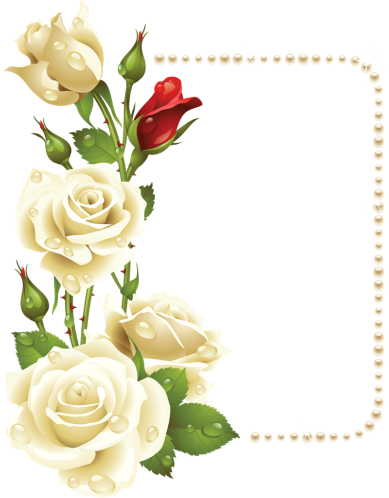 Clipart frames peach. Rose painting flower picture