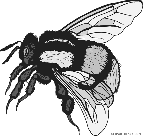 Clipart free bumble bee. Cute clipartblack com animal