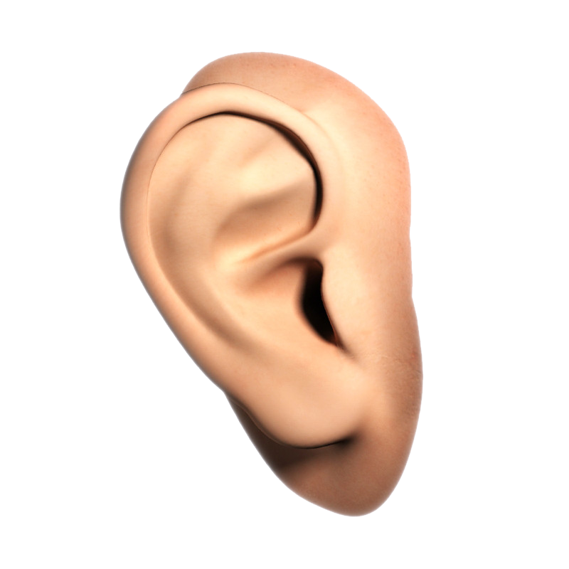 High quality png web. Nose clipart human ear