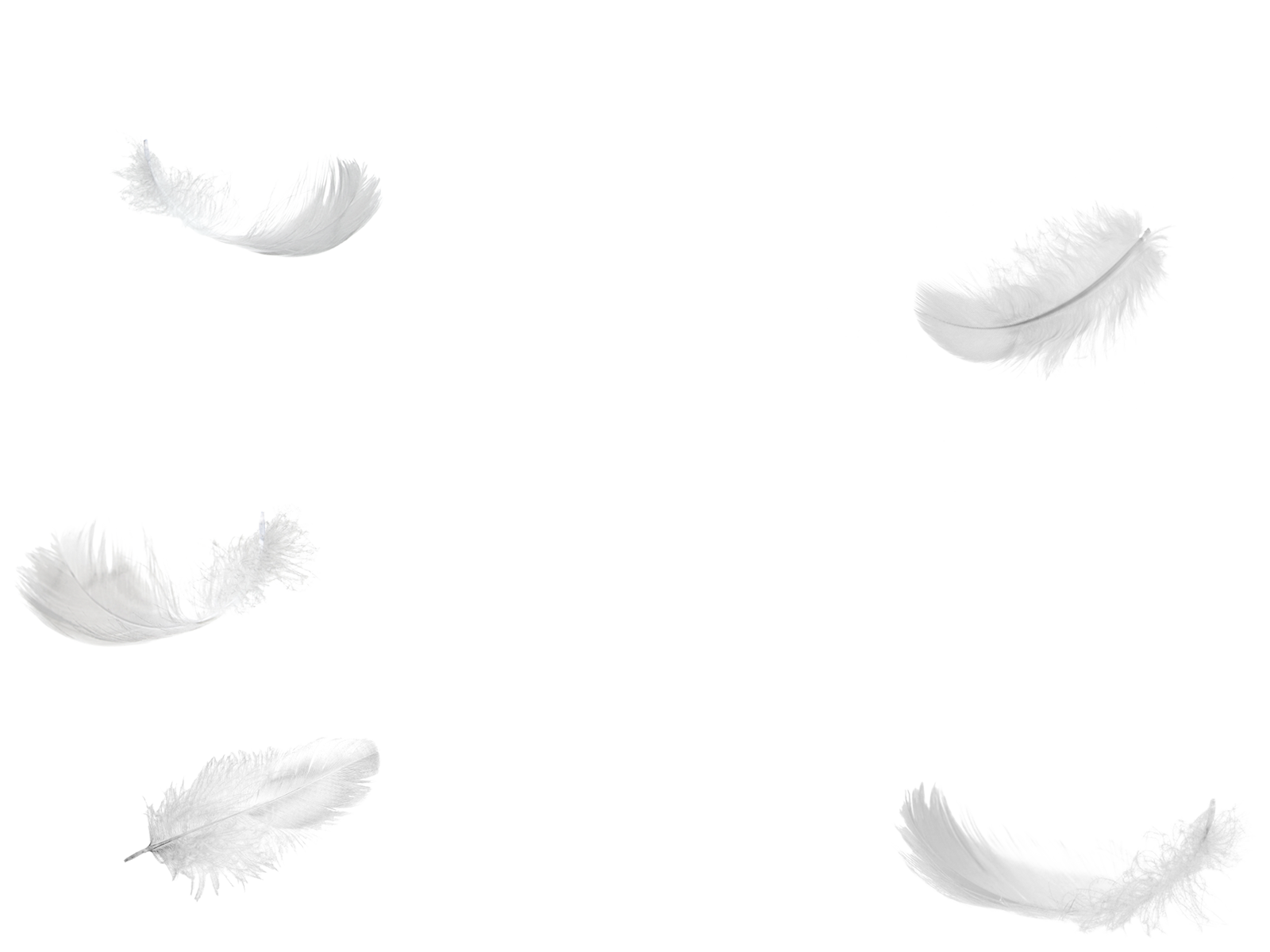 Five falling no background. Feathers clipart fether
