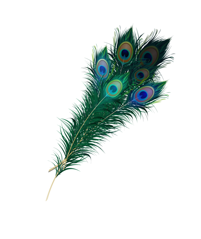 Peacock png by asher. Feather clipart animal