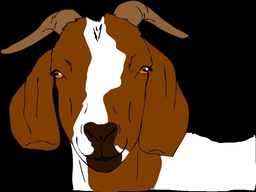 Boer clip art n. Clipart goat illustration