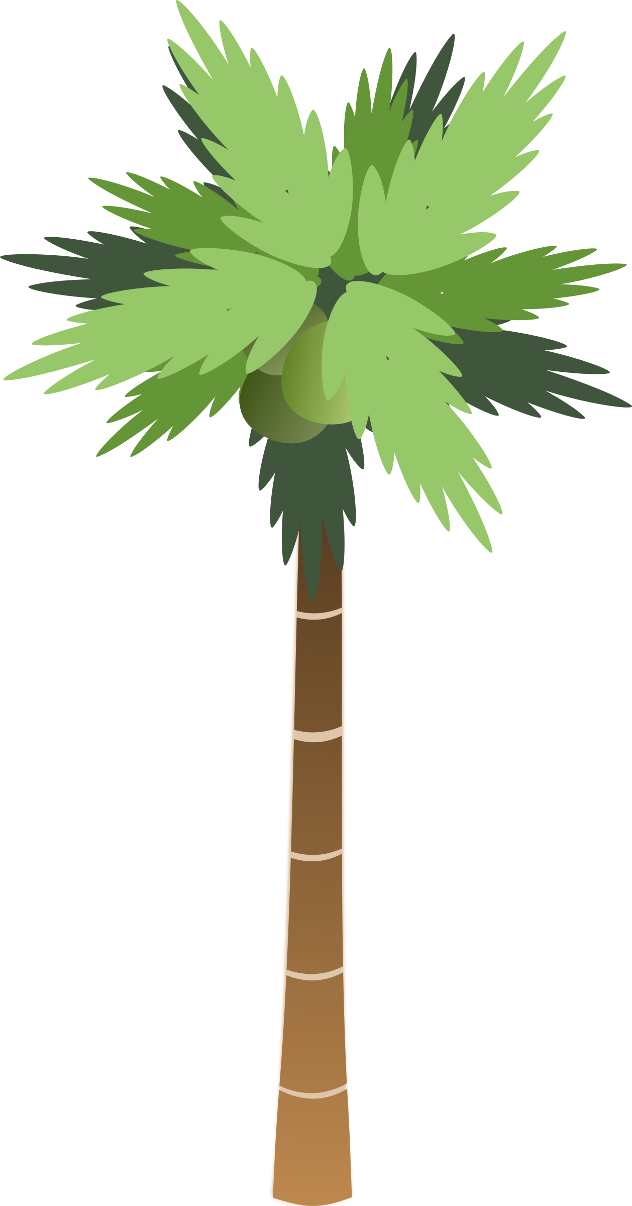 Palm. Tall clipart coconut tree