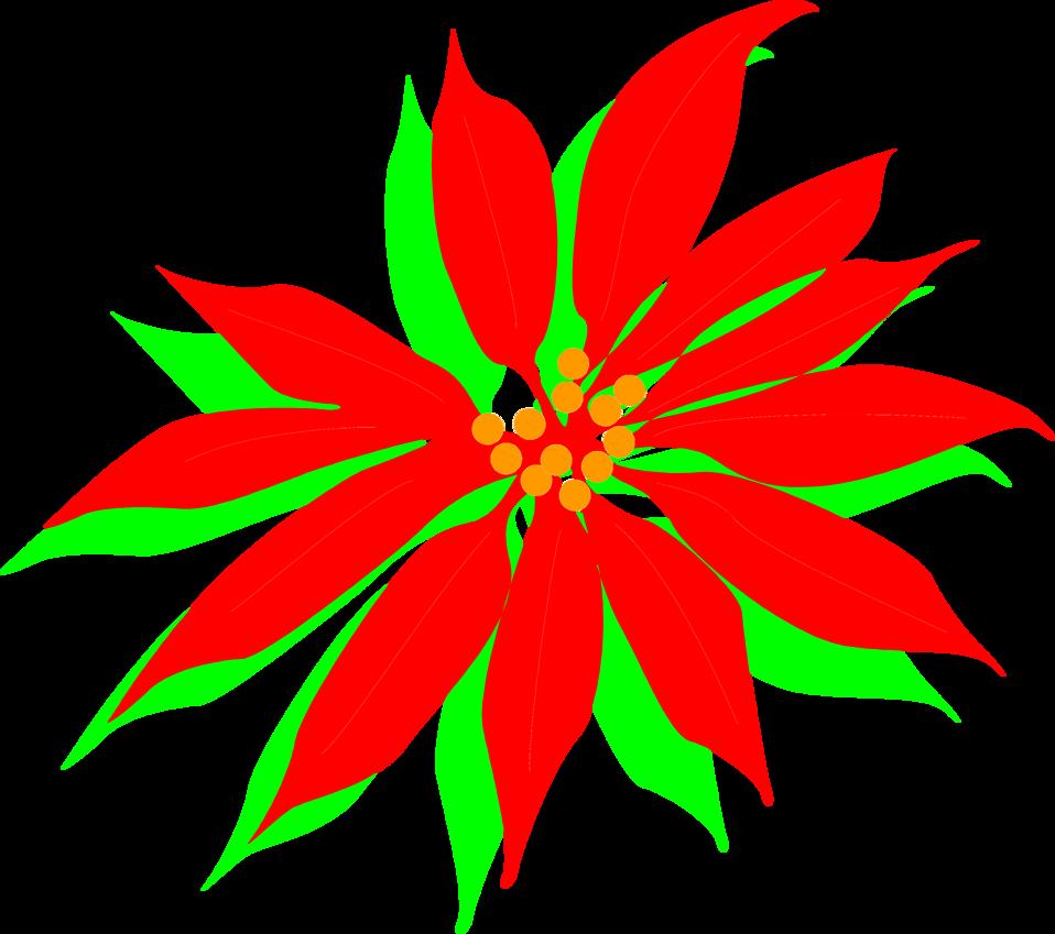 Poinsettias clipart leaf. Poinsettia free stock photo