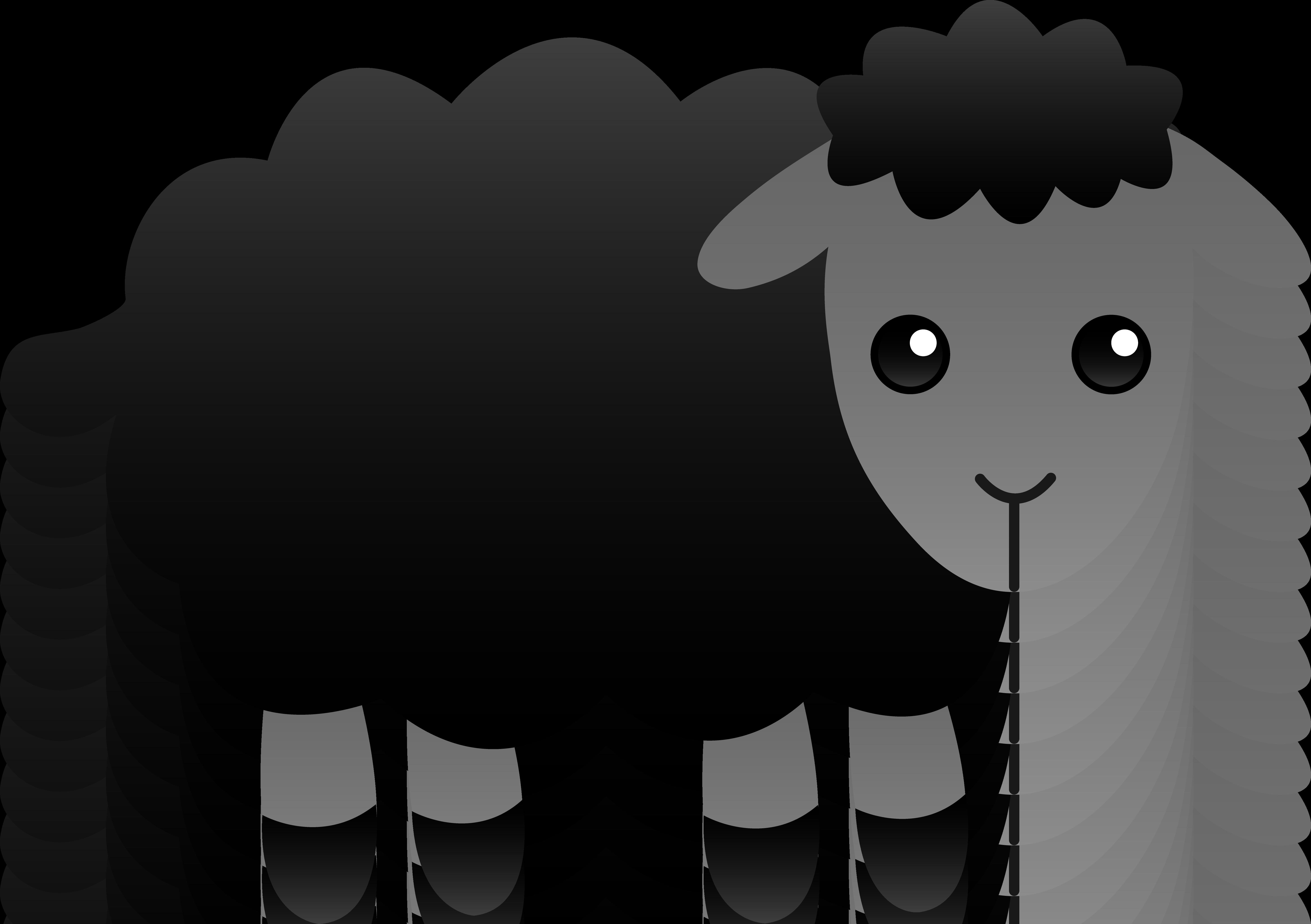 Fluffy Black Sheep
