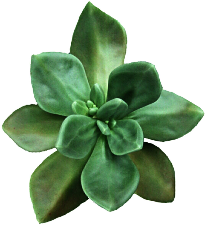 Clipart free succulent.  huge freebie download
