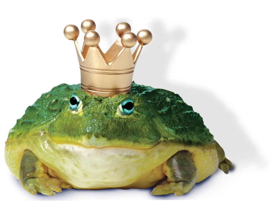 Subprime auto leads for. Clipart frog bullfrog