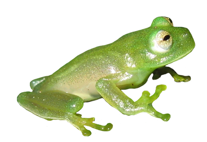 Frog clipart book. Clip art picture of