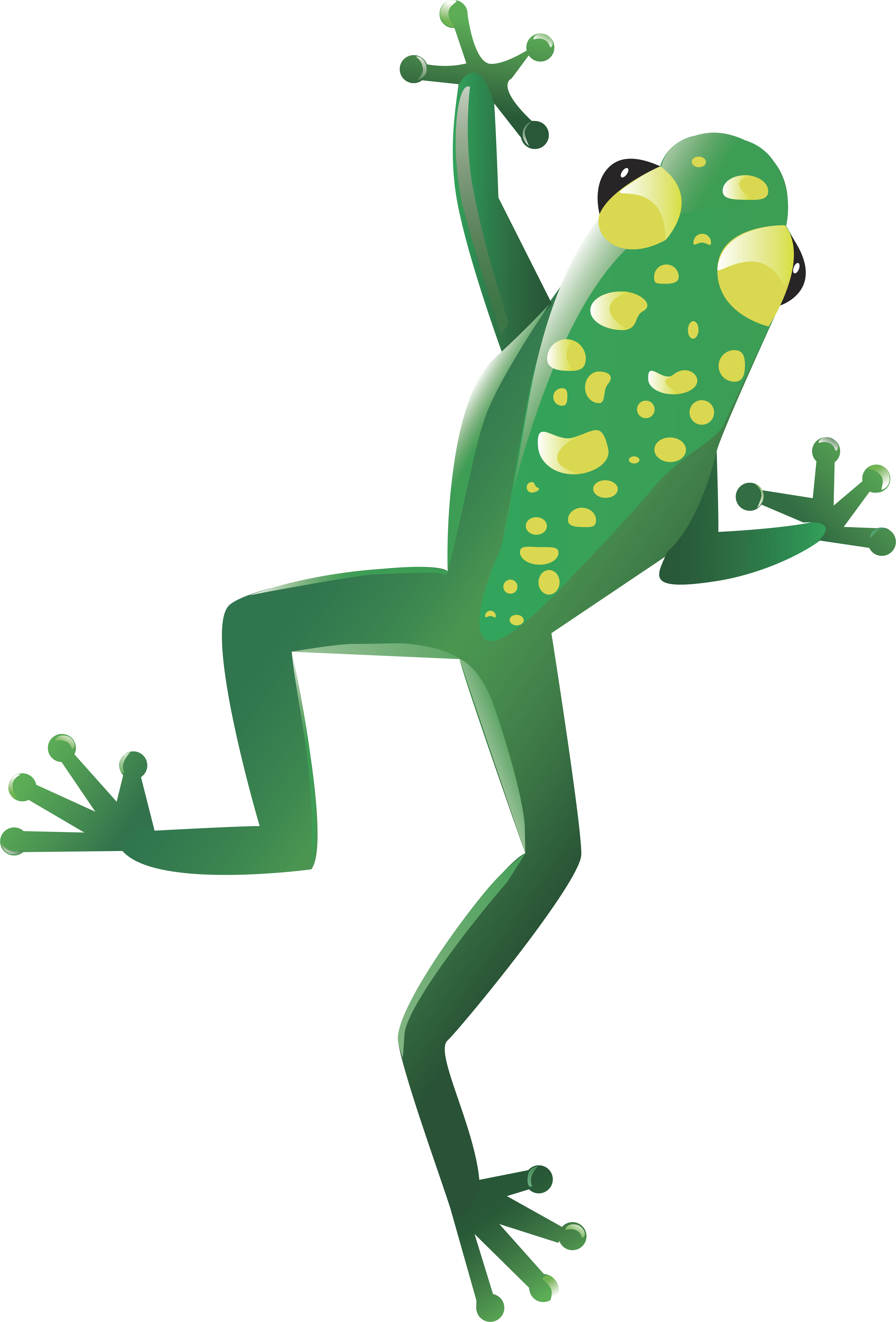 Frogs clipart body. Frog png