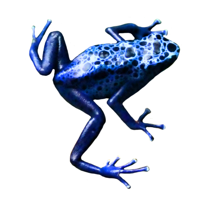 Clip art tree small. Frog clipart poison dart frog