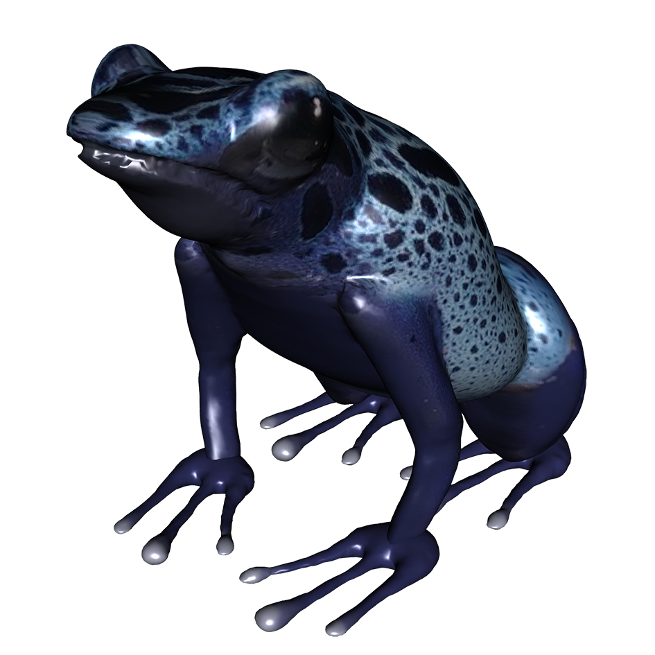 Clip art underside of. Frog clipart poison dart frog