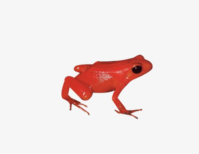 Frog png animal biological. Frogs clipart red