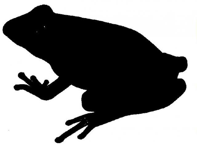 Free download clip art. Clipart frog shadow
