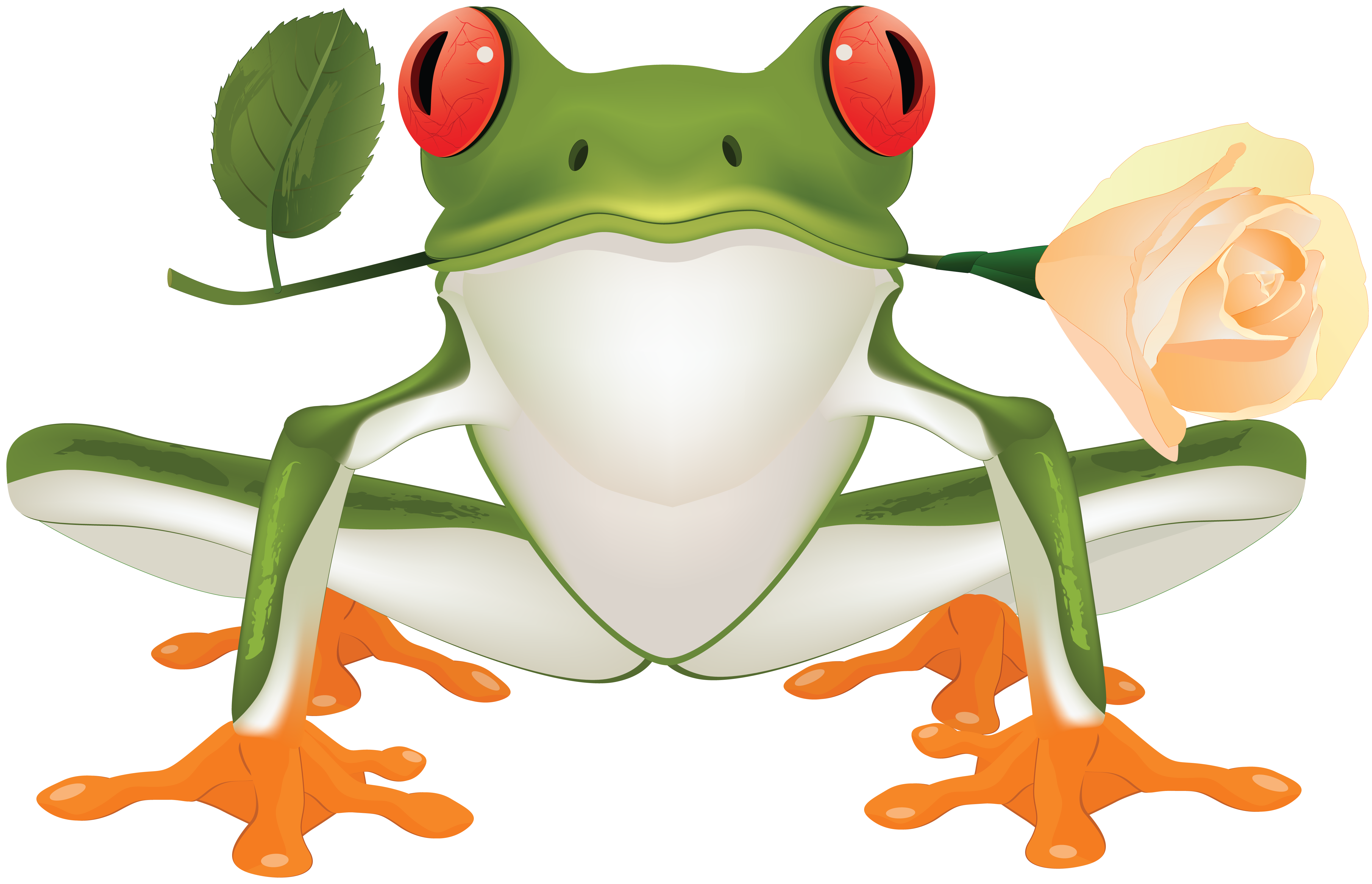 Clipart frog toad. Png image free download